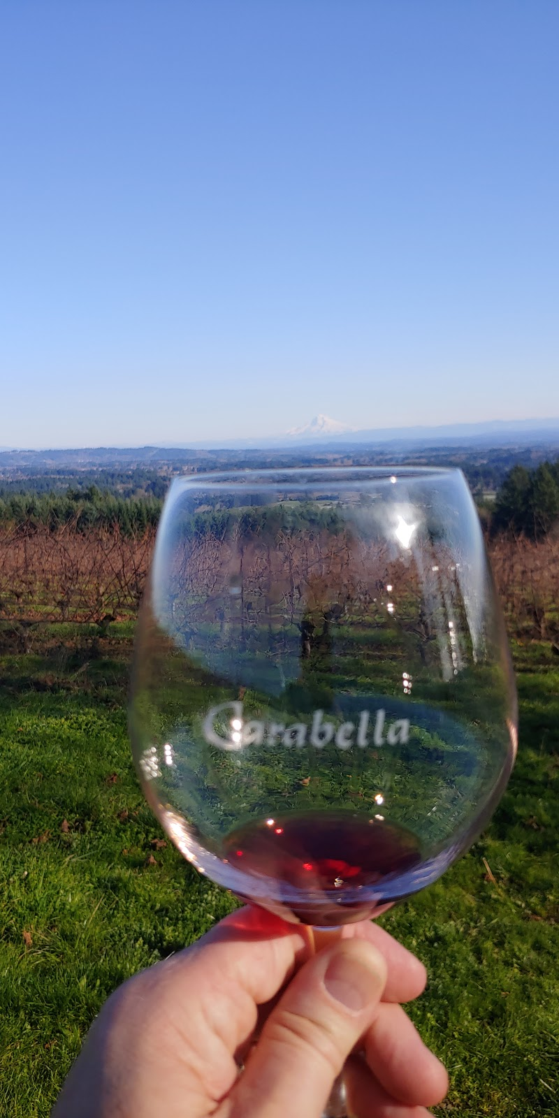 Carabella Vineyard